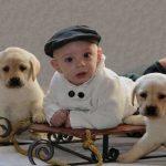 kolton-and-x-mas-pups