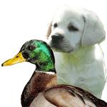 Pupppy with Mallard Duck